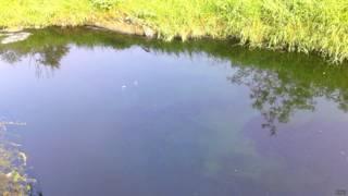 उल्हास नदी