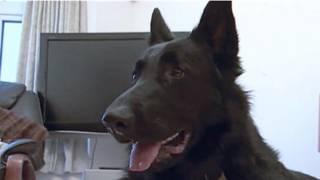 Cão Jack. Foto: BBC