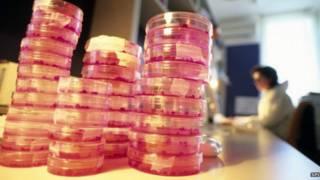 Стволовые клетки в чашках Петри