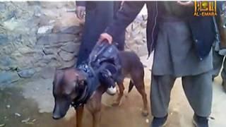 तालिबान, विदेशी कुत्ता