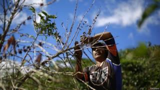 Plantação de café | Crédito: Reuters