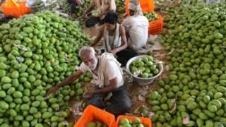 mangga India