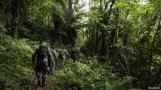 Bosque de Boquete