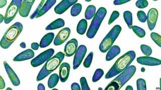 Bacteria Clostridium difficile, resistente a los antibióticos