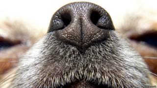 Hocico de perro