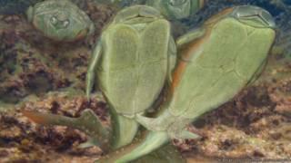 'முதன் முதல் உடலுறவு கொண்டவை மீன்களே' - விஞ்ஞானிகள்