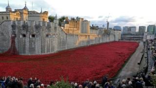 Hoa anh túc tại Tower of London