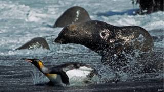 Foca y pingüino