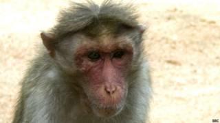 बंदर (फ़ाइल फोटो)