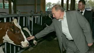 Путин и корова