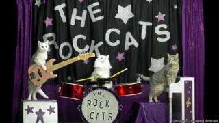 Banda de rock de gatos (foto: Divulgação/Amazing Animals)