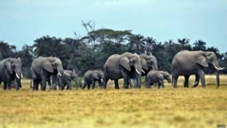 Слоны в Танзании