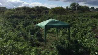 Plantação de maconha em Londres (Foto: Met Police)