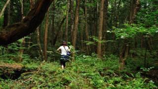 Bosque Aokigahara, Japón