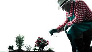 Цветы и садовник