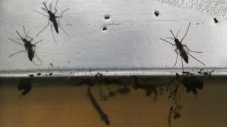 Emergencia zika