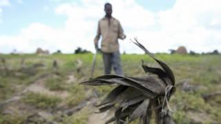 zimbabwe hunger