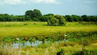 白鹭在黑瞎子岛湿地里准备起飞(新华社图片8/2014)