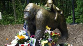 La gente dejó flores, fotos y mensajes para recordar a Harambe, el gorila de 17 años que debió ser sacrificado.
