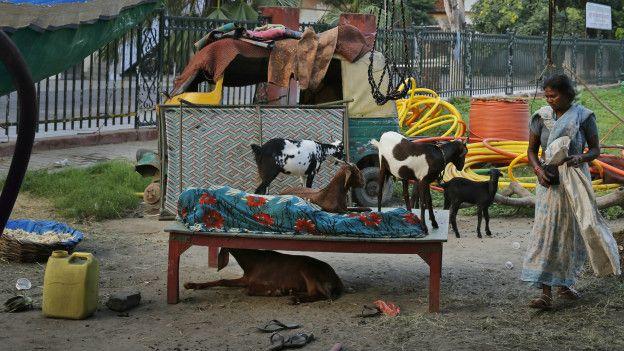 Sem-teto dorme em parque em Lucknow, na Índia (Foto: Rajesh Kumar Singh/AP)