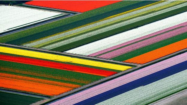 Campos de tulipanes desde arriba