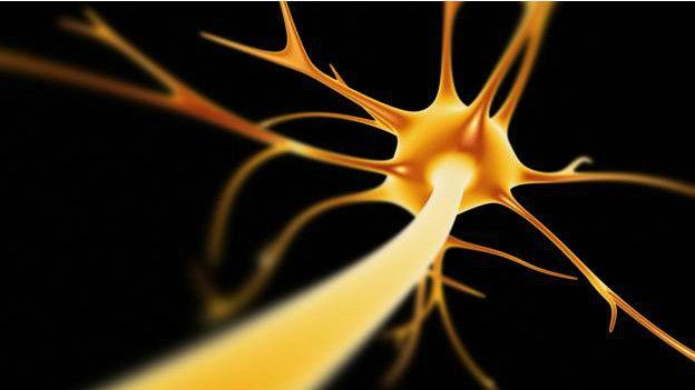 Una neurona