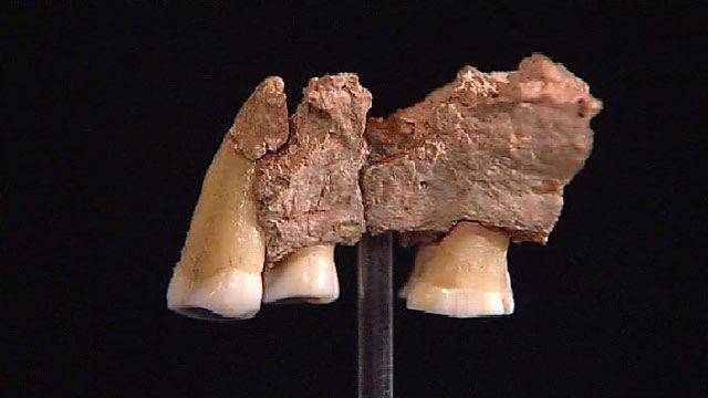 Фрагмент челюсти древнего человека