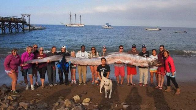 Величезна риба біля узбережжя Каліфорнії