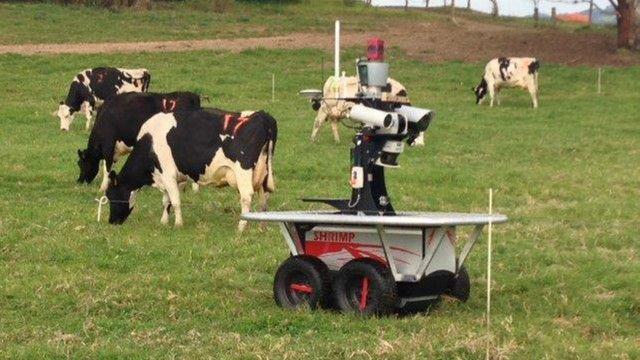Robot que junta a las vacas