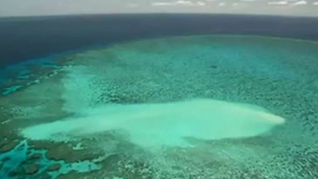 Coral | Crédito: BBC