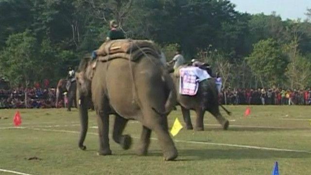 слони на дистанції