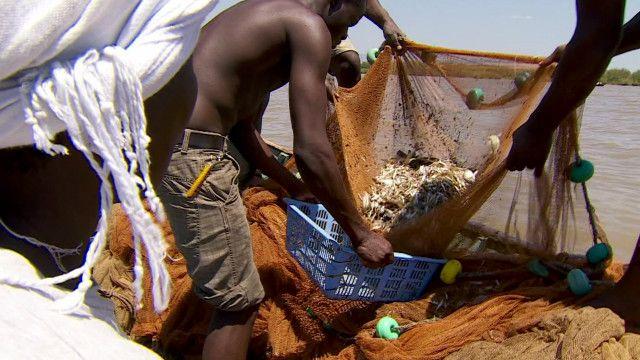 Kenya Fish