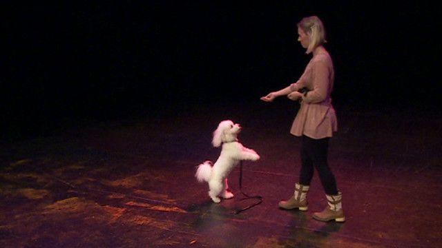 Cachorro faz teste para ópera (BBC)