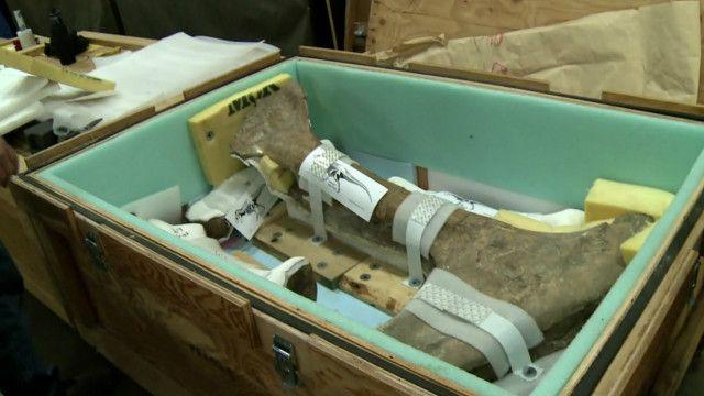 Caixa que transporta tiranossauro. Foto: BBC