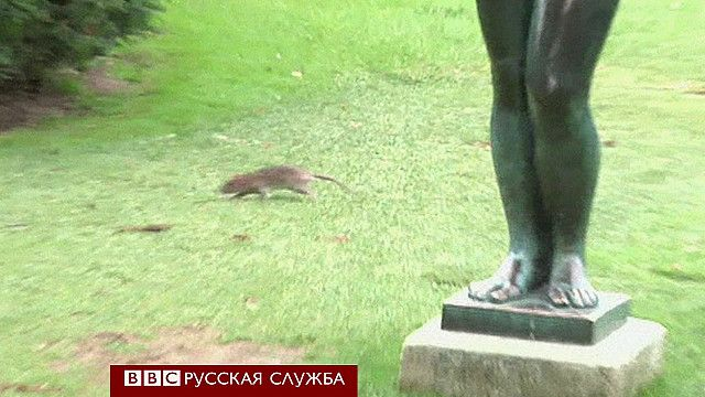 Крысы в садах Лувра