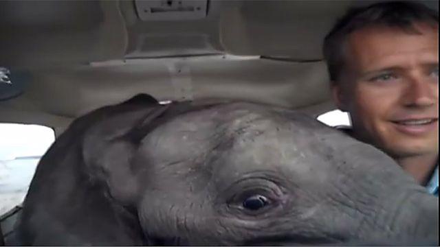 """Слоненок в салоне четырехместной """"Сессны"""""""
