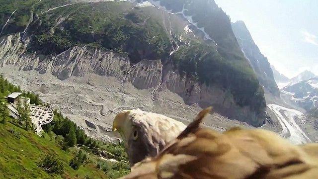Орлан-білохвіст над Альпами