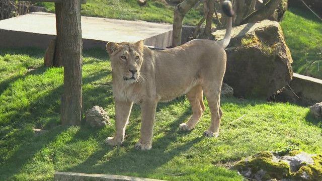 गुजरात, शेर