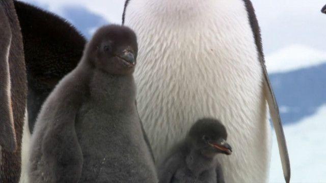 Як допомогти пінгвінам Антарктики, не виходячи з дому?