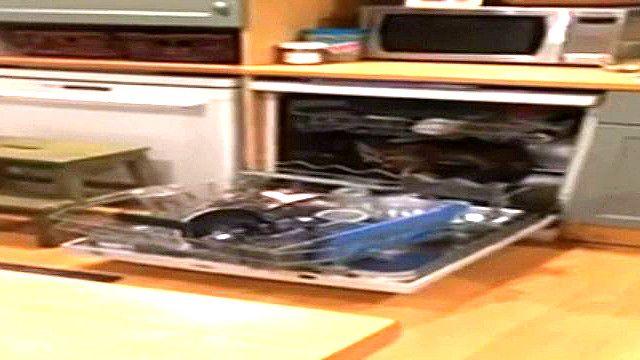 Лиса в посудомоечной машине