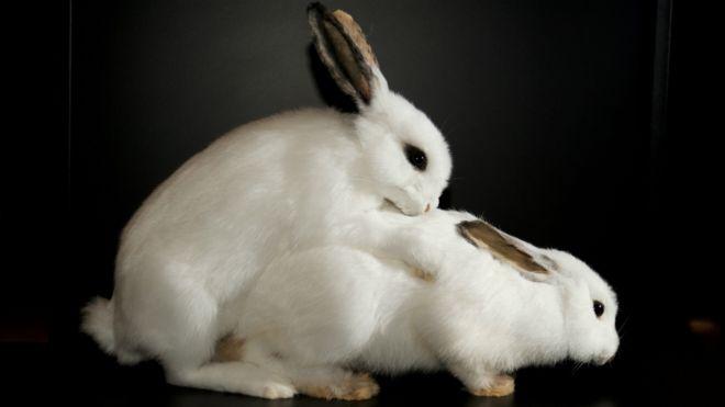 Секс з тваринами і людьми фото 432-283