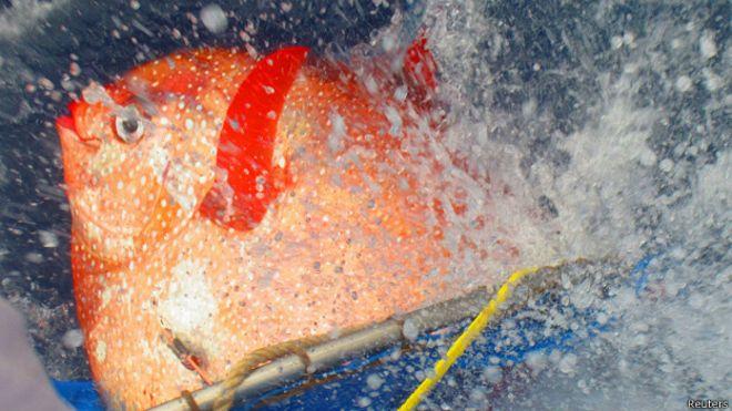 Conozca al luna real el primer pez de sangre caliente  BBC Mundo