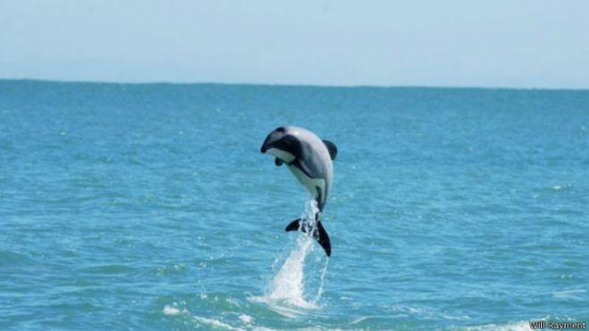 картинки дельфина