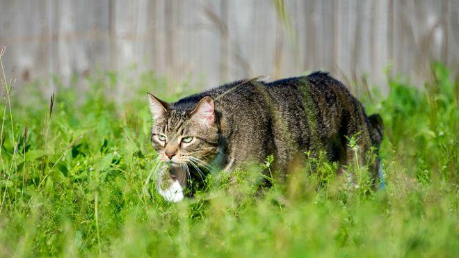Кот на охоте картинка