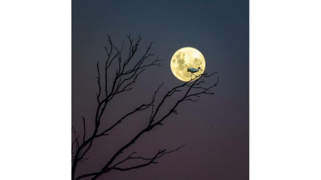 Магия ночного неба